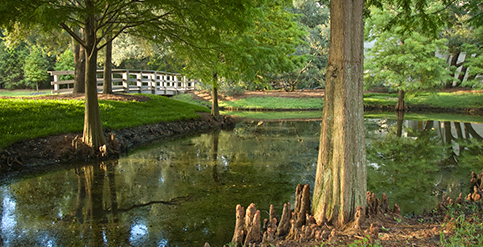 Ponds and Cypress Trees